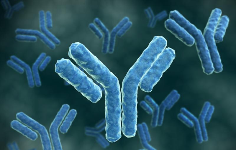 Антитела гепатита С что это такое