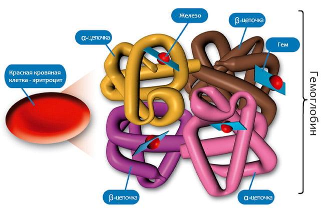 Причины повышенного содержания билирубина в моче